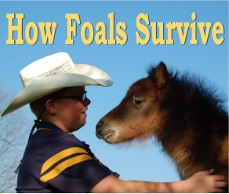 how-foals-survive-module 229x194