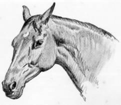 Undaunted: Warrior the War Horse